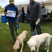 Guide Dogs for the Blind at the Hog Roast
